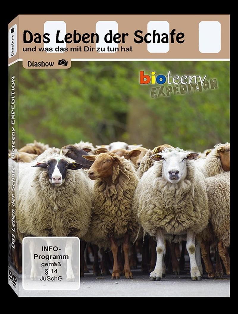Das Leben der Schafe
